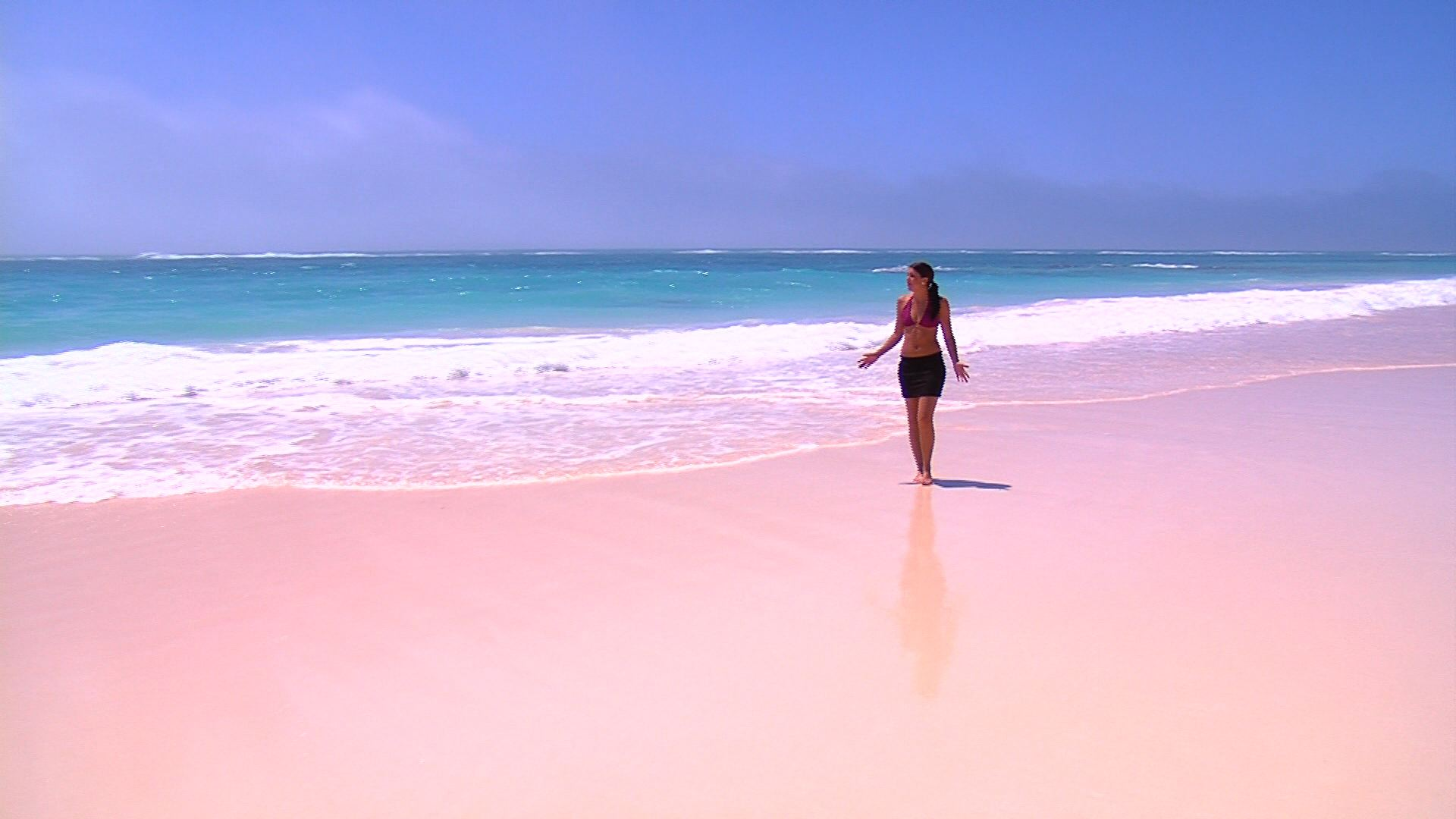 Bermuda beaches pink sand wallpaper for Pink sand beaches bahamas